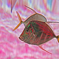 Pretty Fishy, Fish, 6, Multi-color, Pink Backgroun7 by David Frederick