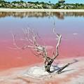 Pretty In Pink by Csilla Florida