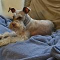 Pretty Puppy by Carol  Bradley