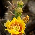 Prickly Bloom by Robert Anschutz