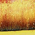 Pueblo Downtown River Grasses 4 by Lenore Senior