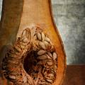 Pumpkin Anatomy by Valentin Ivantsov