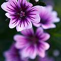 Purple Beauties by Cherie Duran