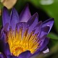 Purple Blossom by Don McBride