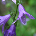 Purple Flower by Dawn Whiteaker