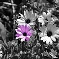 Purple Flower by Erik Dunn