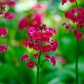 Purple Flowers by Paul Kloschinsky