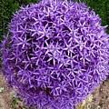 Purple Globe by Jeanette Oberholtzer