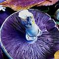 Purple  by Lisa Anne Warren