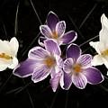 Purple Passion by Regina Arnold