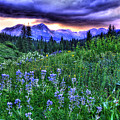 Purple Skies And Wildflowers by Scott Mahon