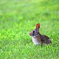 Rabbit by Linda Kerkau