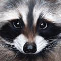 Raccoon by Sarah Stribbling