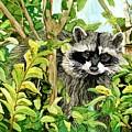 Raccoon by Tammy Crawford