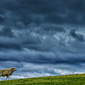 Rain Storm Ewe And Lamb by Thomas R Fletcher