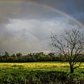 Rainbow Fields by Martin Newman