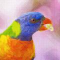 Rainbow Lorikeet by Sheila Smart Fine Art Photography