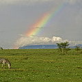 Rainbow Over The Masai Mara by Michele Burgess