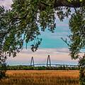 Ravenel Bridges by Yvette Wilson