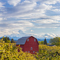 Red Barn And Mt Hood by Patricia Davidson