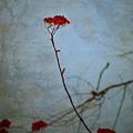 Red Berries Blue Sky by Tara Turner