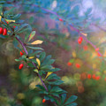 Red Berries by June Marie Sobrito