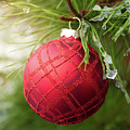 Red Christmas Ball On Icy Evergreen Leaves by William Freebilly photography