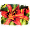 Red Daylily by Margie Wildblood