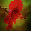 Red Hibiscus Art by Mary Bellew