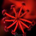 red by Iv Aburto