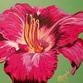 Red Lily Valley by Brenda Morgado