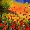 Red Poppies 451 by Pol Ledent