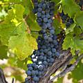 Red Vines by U Schade