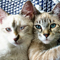 Rescued And Spoiled by Kristin Elmquist