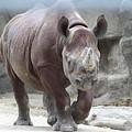 Rhino by Rocky Washington