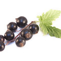 Ribes Nigrum Isolated by D R