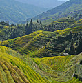 Rice Terraces In Guilin, China  by Moshe Torgovitsky