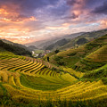 Rice Terraces by Pham Ty