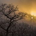 Rime Ice And Fog At Sunset - Telephoto by John MacLean