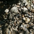 River Stones by Wolfgang Schweizer