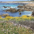Rocky Surf With Wildflowers by Carol Groenen