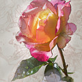 Rosa, 'glowing Peace' by Mark Mille