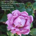 Rose-15 by Anand Swaroop Manchiraju