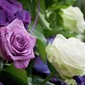 Rose by Dorothy Binder