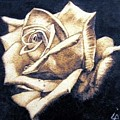 Rose by Ilaria Andreucci