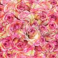Roses Background by Svetlana Foote