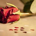 Roses by Sebastien Coell