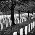 Rows Of Honor by Paul W Faust - Impressions of Light