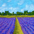 Rows Of Lavender In Provence by Mike Kraus