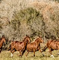 Running Horses by Peggy Blackwell